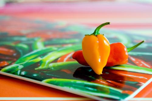 Chili, Peperoni &Co.: Einige Capsicum- Sorten im Portrait